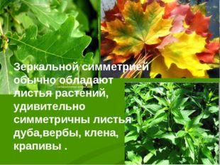 Зеркальной симметрией обычно обладают листья растений, удивительно симметричн