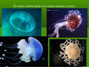Лучевую симметрию мы также видим у медуз,