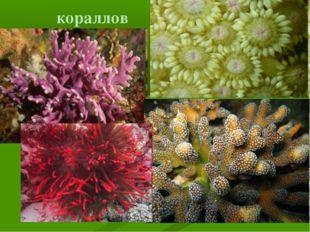 кораллов