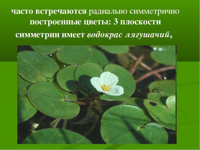 часто встречаются радиально симметрично построенные цветы: 3 плоскости симмет...