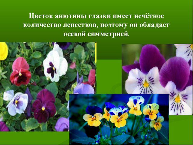 Цветок анютины глазки имеет нечётное количество лепестков, поэтому он обладае...
