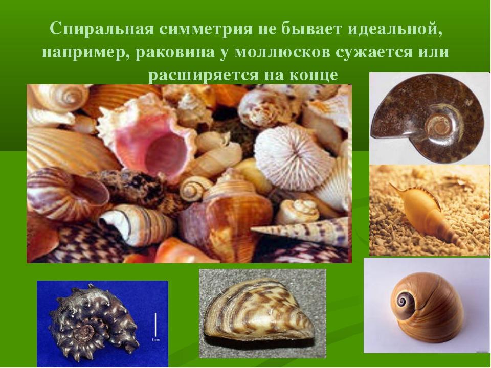 Спиральная симметрия не бывает идеальной, например, раковина у моллюсков сужа...