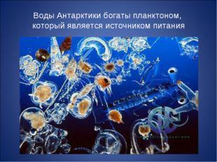 Воды Антарктики богаты планктоном, который является источником питания