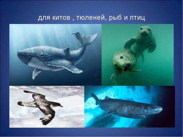 для китов , тюленей, рыб и птиц