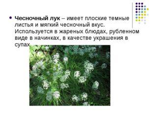 Чесночный лук – имеет плоские темные листья и мягкий чесночный вкус. Использу