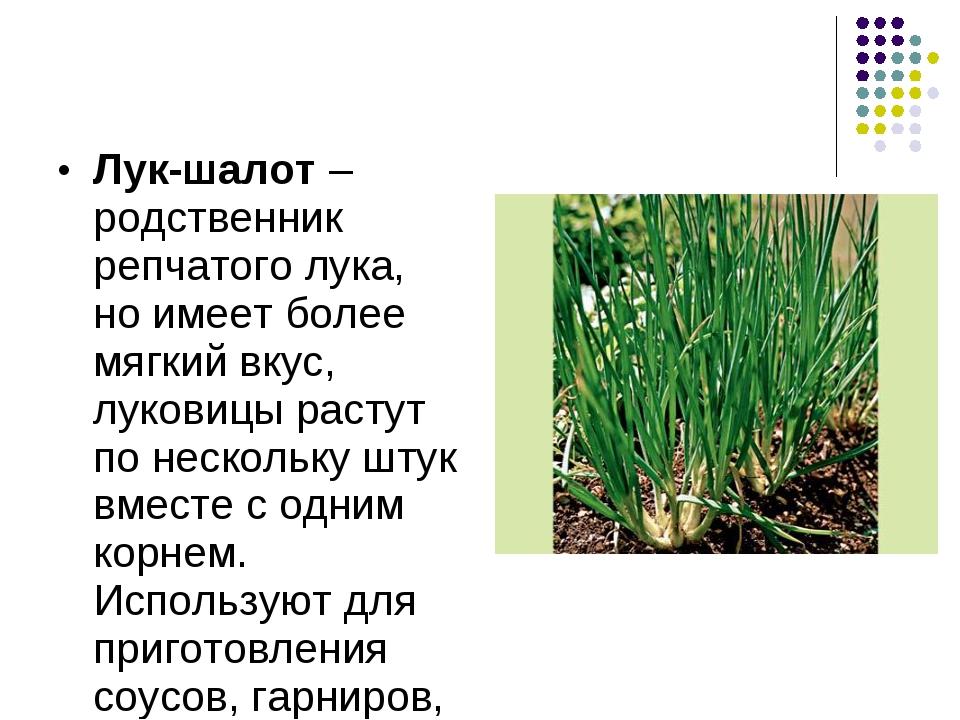 Лук-шалот – родственник репчатого лука, но имеет более мягкий вкус, луковицы...