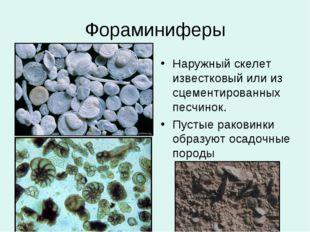 Фораминиферы Наружный скелет известковый или из сцементированных песчинок. Пу