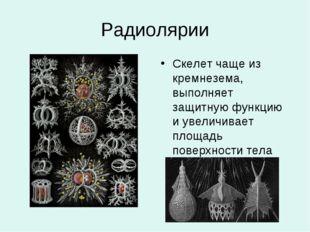 Радиолярии Скелет чаще из кремнезема, выполняет защитную функцию и увеличивае