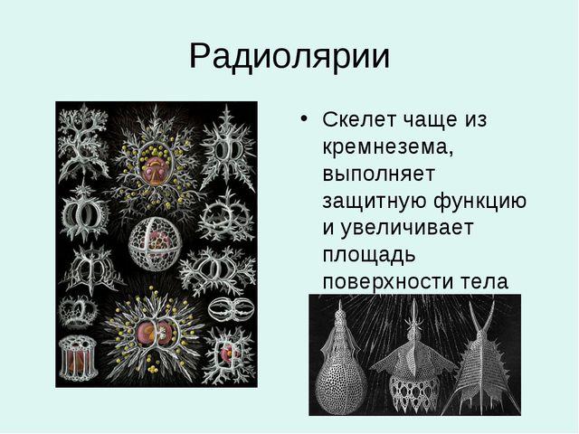 Радиолярии Скелет чаще из кремнезема, выполняет защитную функцию и увеличивае...