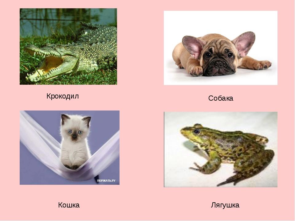 Крокодил Собака Кошка Лягушка