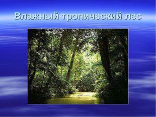 Влажный тропический лес