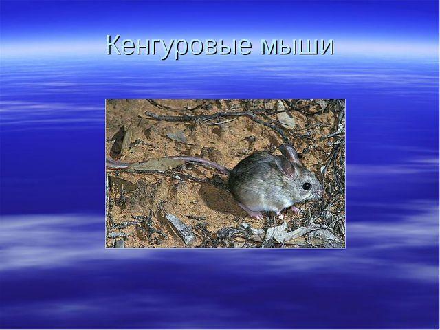 Кенгуровые мыши
