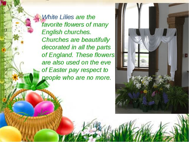 White Lilies are the favorite flowers of many English churches. Churches are...