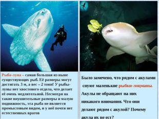 Рыба-луна – самая большая из ныне существующих рыб. Её размеры могут достигат