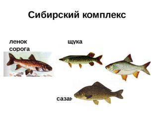 Сибирский комплекс ленок щука сорога сазан