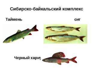 Сибирско-байкальский комплекс Таймень сиг Черный хариус