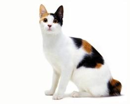 http://i.ucrazy.ru/files/i/2013.3.11/best_cat100.jpg