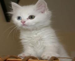http://pitomecdoma.ru/cat/cat4.jpg