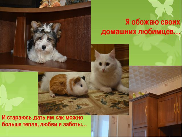 Я обожаю своих домашних любимцев… И стараюсь дать им как можно больше тепла,...