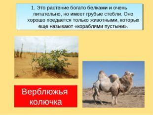 1. Это растение богато белками и очень питательно, но имеет грубые стебли. Он