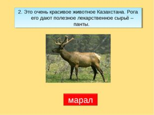 2. Это очень красивое животное Казахстана. Рога его дают полезное лекарственн