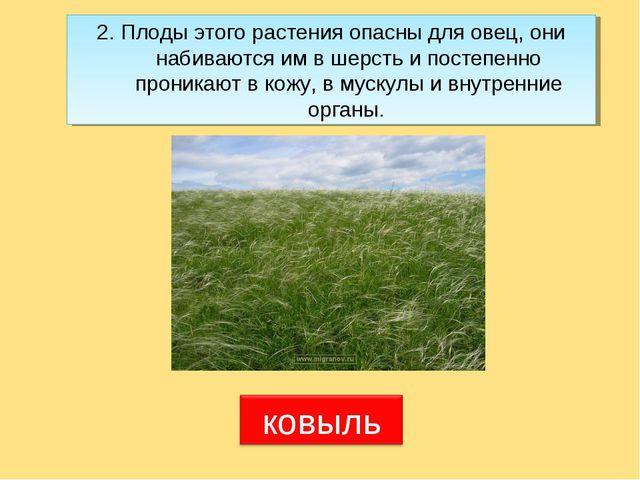 2. Плоды этого растения опасны для овец, они набиваются им в шерсть и постепе...