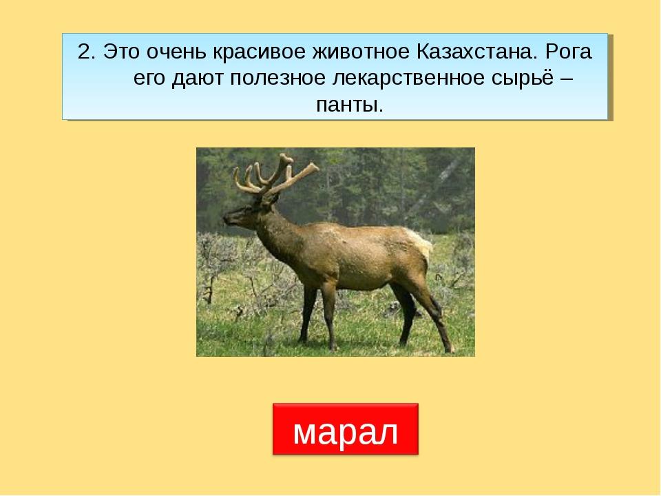 2. Это очень красивое животное Казахстана. Рога его дают полезное лекарственн...