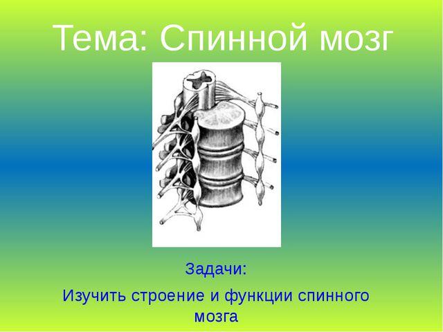 Тема: Спинной мозг Задачи: Изучить строение и функции спинного мозга