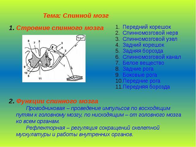 Тема: Спинной мозг  Строение спинного мозга Передний корешок Спинномозг...