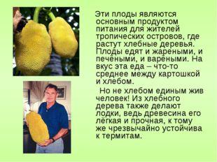 Эти плоды являются основным продуктом питания для жителей тропических остров