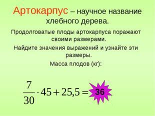 Артокарпус – научное название хлебного дерева. Продолговатые плоды артокарпус