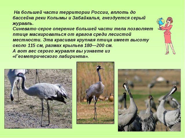 На большей части территории России, вплоть до бассейна реки Колымы и Забайка...