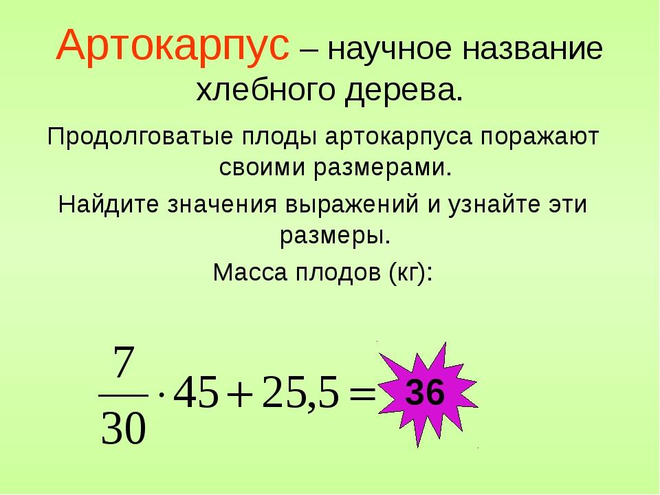 Артокарпус – научное название хлебного дерева. Продолговатые плоды артокарпус...