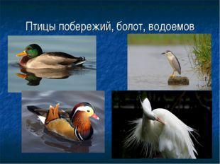 Птицы побережий, болот, водоемов