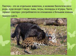 Пантера – это не отдельное животное, а название биологического рода, куда вхо