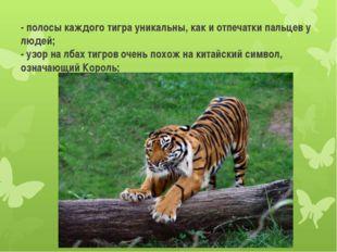 - полосы каждого тигра уникальны, как и отпечатки пальцев у людей; - узор на
