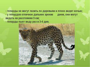- гепарды не могут лазить по деревьям и плохо видят ночью; - у гепардов отлич