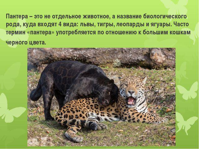 Пантера – это не отдельное животное, а название биологического рода, куда вхо...