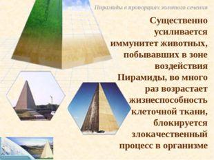 Пирамиды в пропорциях золотого сечения Существенно усиливается иммунитет живо