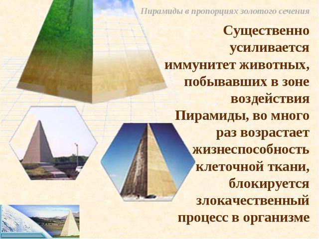 Пирамиды в пропорциях золотого сечения Существенно усиливается иммунитет живо...