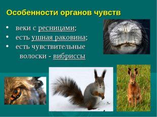 Особенности органов чувств веки с ресницами; есть ушная раковина; есть чувств