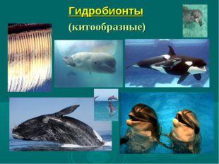 Гидробионты (китообразные)