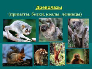 Древолазы (приматы, белки, коалы, ленивцы)