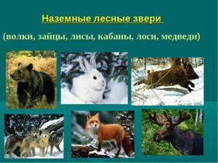 Наземные лесные звери (волки, зайцы, лисы, кабаны, лоси, медведи)