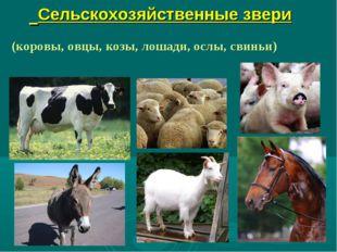 Сельскохозяйственные звери (коровы, овцы, козы, лошади, ослы, свиньи)