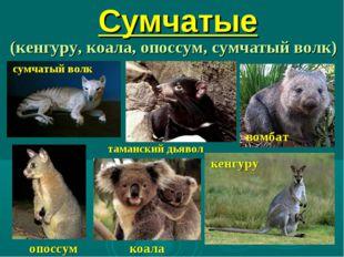 Сумчатые (кенгуру, коала, опоссум, сумчатый волк) опоссум кенгуру сумчатый во