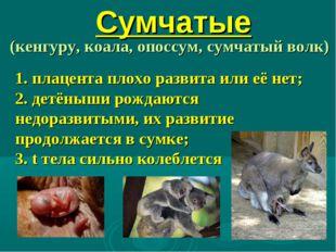 Сумчатые (кенгуру, коала, опоссум, сумчатый волк) 1. плацента плохо развита и