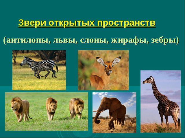 Звери открытых пространств (антилопы, львы, слоны, жирафы, зебры)