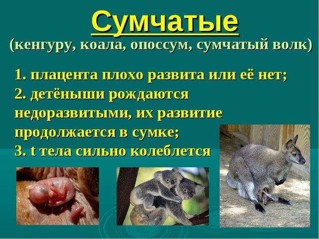Сумчатые (кенгуру, коала, опоссум, сумчатый волк) 1. плацента плохо развита и...