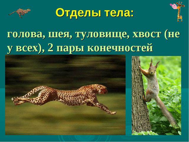 Отделы тела: голова, шея, туловище, хвост (не у всех), 2 пары конечностей